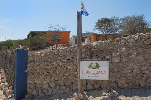 Dos Iguana