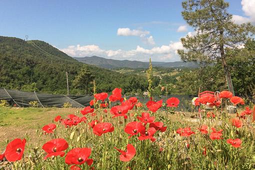 Campeggio Naturista Costalunga (10)