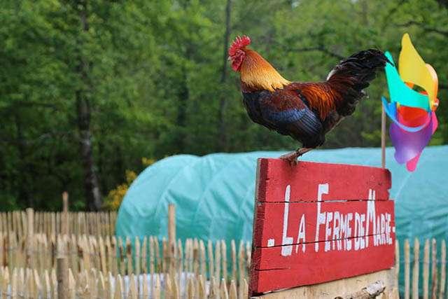 Domaine du coq Rouge (11)