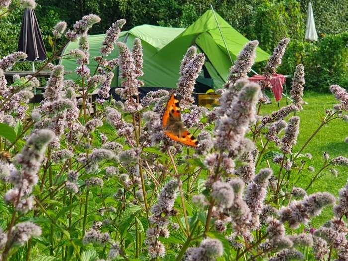 Tysmosen FriluftsCenter & NaturCamping (3)